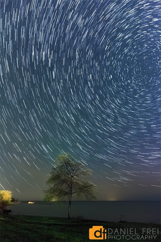 Star Trails over Tree